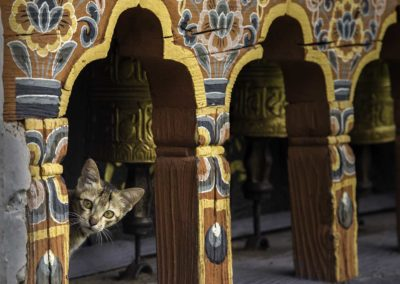 Kitten and Prayer Wheels