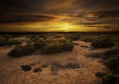 Shearwater burrows at sunset - Althorpe island, South Australia
