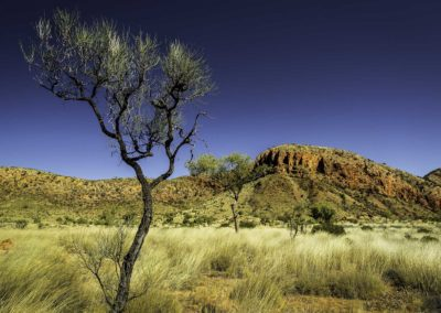 Trees of Ormiston Pound#4 - West McDonnalds, Northern territory