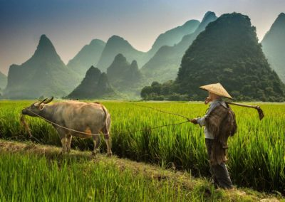 Farmer and Ox in Guilin